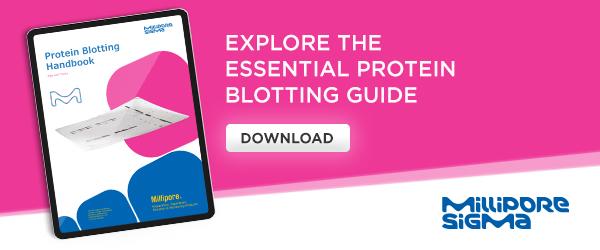 Explore the essential protein blotting guide